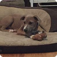 Adopt A Pet :: Clay - Albemarle, NC