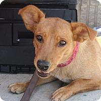 Corgi Mix Dog for adoption in Rockville, Maryland - Mimi