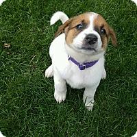 Adopt A Pet :: Meadow - Minneapolis, MN