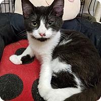 Adopt A Pet :: Tetris - Trevose, PA