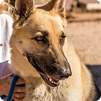 German Shepherd Dog Mix Dog for adoption in Phoenix, Arizona - Heidi