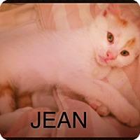 Adopt A Pet :: Jean - Brooklyn, NY