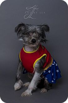Chinese Crested Mix Dog for adoption in Baton Rouge, Louisiana - Baby