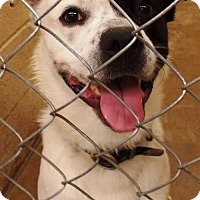 Adopt A Pet :: Quintas - Crown Point, IN