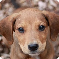 Adopt A Pet :: Acer - ADOPTED - Brattleboro, VT