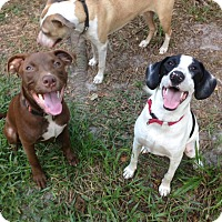 Adopt A Pet :: Mercury - Groveland, FL