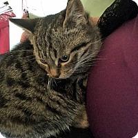 Adopt A Pet :: Phin - Toronto, ON