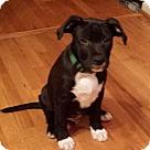 Adopt A Pet :: Baby Rudy