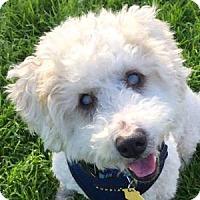 Adopt A Pet :: Jasper - La Costa, CA