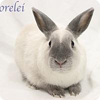 Adopt A Pet :: Lorelei - Bradenton, FL