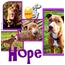 Photo 1 - American Pit Bull Terrier/American Staffordshire Terrier Mix Dog for adoption in Colleyville, Texas - Hope