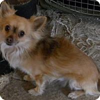 Adopt A Pet :: Mack - dewey, AZ