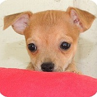 Adopt A Pet :: Carson - La Habra Heights, CA