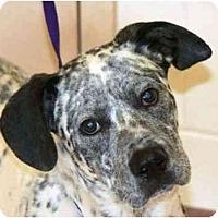 Adopt A Pet :: Chopper - Milwaukee, WI