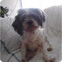 Adopt A Pet :: Horton - Brewster, NY