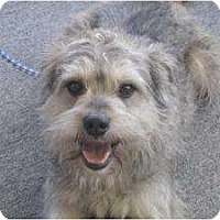 Adopt A Pet :: Tony - Pending! - kennebunkport, ME