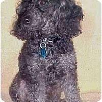 Adopt A Pet :: Jericho - Mooy, AL