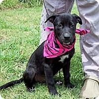 Adopt A Pet :: AZLIN/Special Summer Pricing - Glastonbury, CT