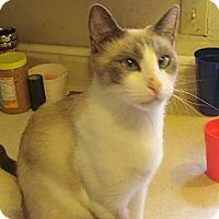 Adopt A Pet :: Charlotte - Garland, TX