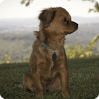Adopt A Pet :: Rufus - Knoxville, TN