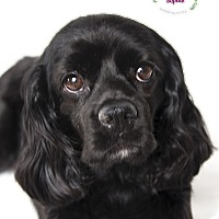 Adopt A Pet :: Sophie - Rancho Mirage, CA