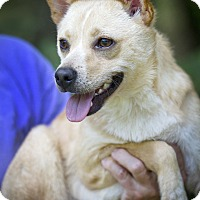 Adopt A Pet :: Sparky - Charlemont, MA