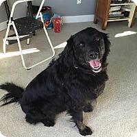 Adopt A Pet :: BENTLEY - pending - Morgantown, IN