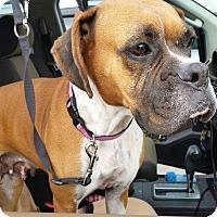 Adopt A Pet :: Mrs. Appleby - Austin, TX