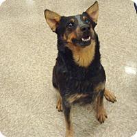 Adopt A Pet :: Girl - Las Vegas, NV