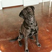 Adopt A Pet :: Othello - San Antonio, TX