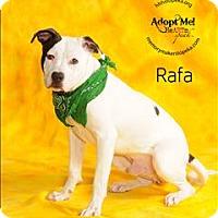 Adopt A Pet :: Rafa - Topeka, KS