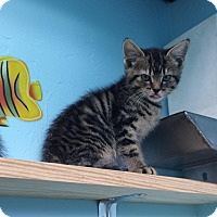 Adopt A Pet :: Lippy - Woodward, OK