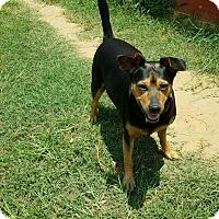 Adopt A Pet :: Lulu #3 - Graceville, FL