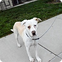 Adopt A Pet :: Bowie - Meridian, ID