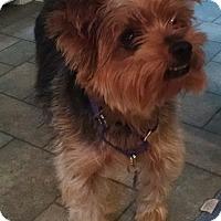 Adopt A Pet :: Sparky - Richmond, VA