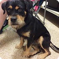 Adopt A Pet :: Abel - Bogalusa, LA
