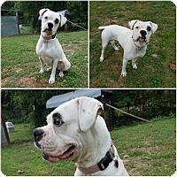Adopt A Pet :: Elsa - Granby, MO