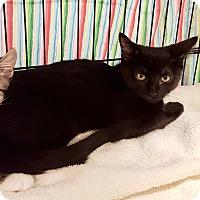 Adopt A Pet :: Boa - Colmar, PA