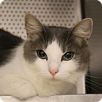 Adopt A Pet :: Lizzy - Sarasota, FL