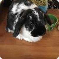 Adopt A Pet :: Chloe - Woburn, MA