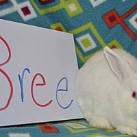 Adopt A Pet :: Bree - Erie, PA