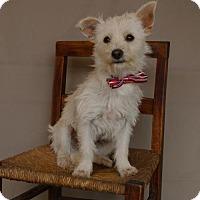 Adopt A Pet :: Markie - Carrollton, TX