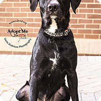 Adopt A Pet :: Diesel - Mooresville, NC