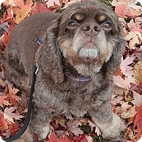 Adopt A Pet :: Mia - Hudson, WI