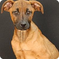 Adopt A Pet :: Kacie - Newland, NC