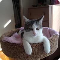 Adopt A Pet :: Willie (aka Willie Nelson) - Salem, MA