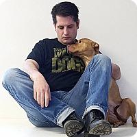 Adopt A Pet :: Sparkle - Elyria, OH