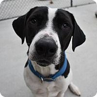 Adopt A Pet :: Tracker - Prince George, VA