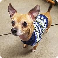 Adopt A Pet :: Chance - Gloversville, NY