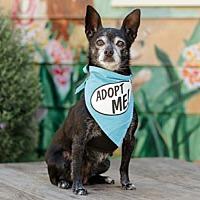 Adopt A Pet :: Little Bit - Pacific Grove, CA